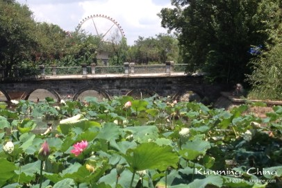 """We also saw many """"western"""" friends, and even got to enjoy a picnic at this lovely park in Kunming."""