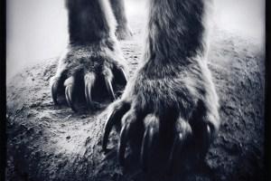 Shearwater-Animal-Joy