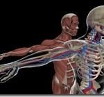 holo-anatomy[1]