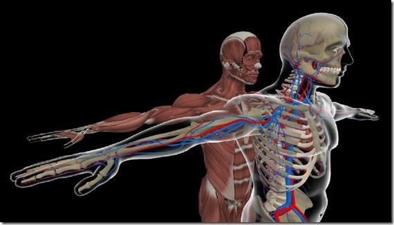 holo-anatomy-1200x681[1]