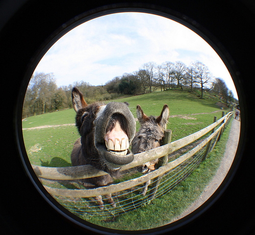 photo credit: Donkeys via photopin (license)