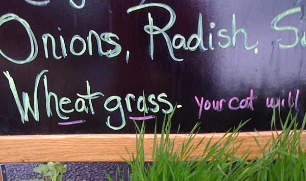 farmers market sign #writes4food
