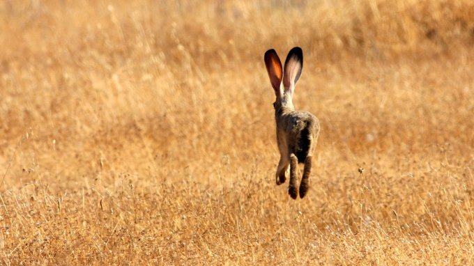 Summer Hare – writing in north norfolk