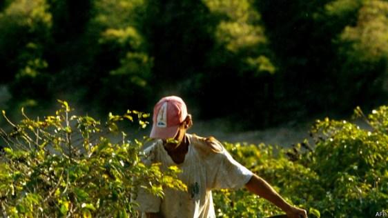 Plantação no interior brasileiro, em foto de arquivo (AFP)