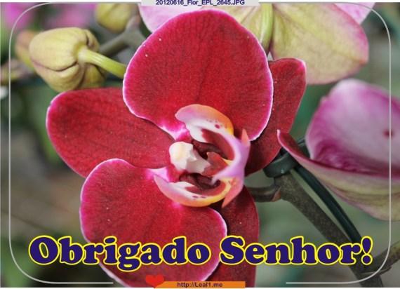 FVWu_20120616_Flor_EPL_2645
