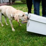 Keeping Bees Safe: It's A Ruff Job, But This Doggy Detective Gets It Done