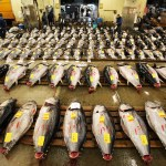 Should Pacific Bluefin Tuna Be Listed As An Endangered Species?