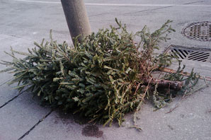 Curbside tree