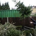 Where to Recycle Your Christmas Tree in the Bay Area, 2012/2013 Edition
