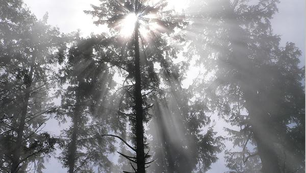 Humboldt Redwoods State Park  (Image credit: Lee Edwin Coursey/Flickr)