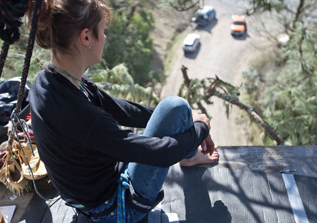"The protester known as ""Warbler"" watched a Caltrans truck from her perch 71 feet up a Ponderosa pine near the Mendocino County town of Willits. Warbler protested Caltrans' plan to build a bypass for U.S. 101 by sitting in the tree for more than a month. Critics of the Caltrans proposal said the project will have dire environmental consequences. (Deborah Svoboda / KQED)"