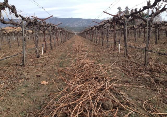 winedrought