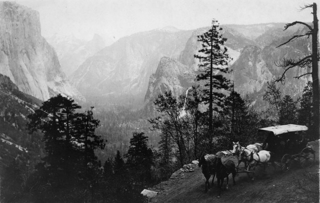Improved roadways brought carriages further into the park in the late 1800s. Today, a parking lot  and tram traffic is impeding sequoia growth. (Courtesy of the Yosemite National Park Research Library.)