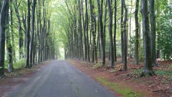 Magical forest near Arnhem.