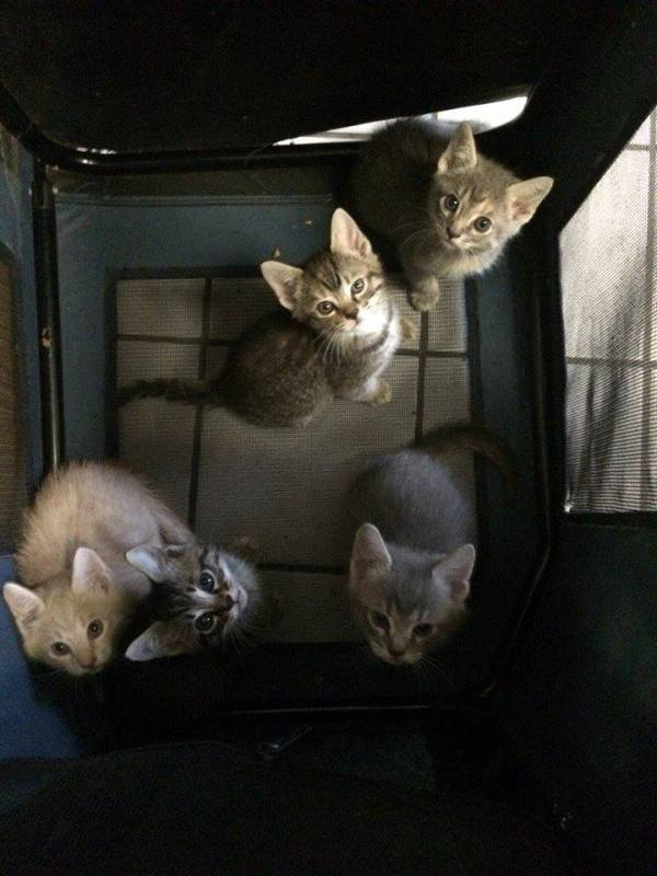 Kittens Rescued from Container