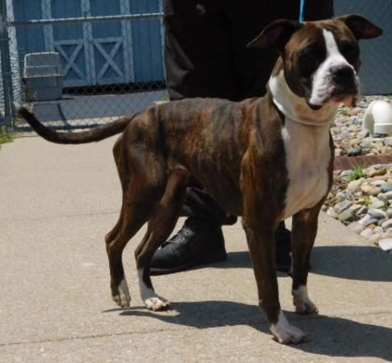 Large Of Daviess County Animal Shelter