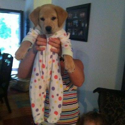 Cute puppy in pajamas, cute puppy in pjs