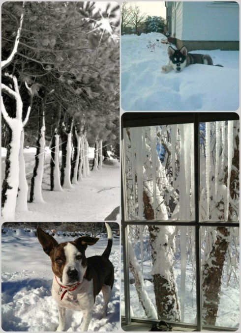 Snowy photos, dogs in snow
