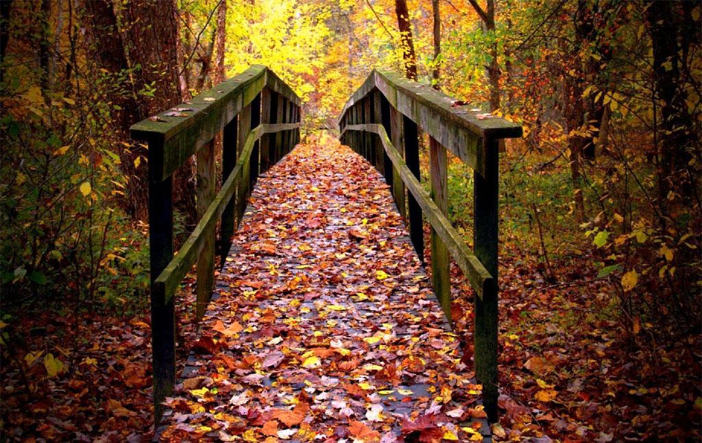 Fall at LBL