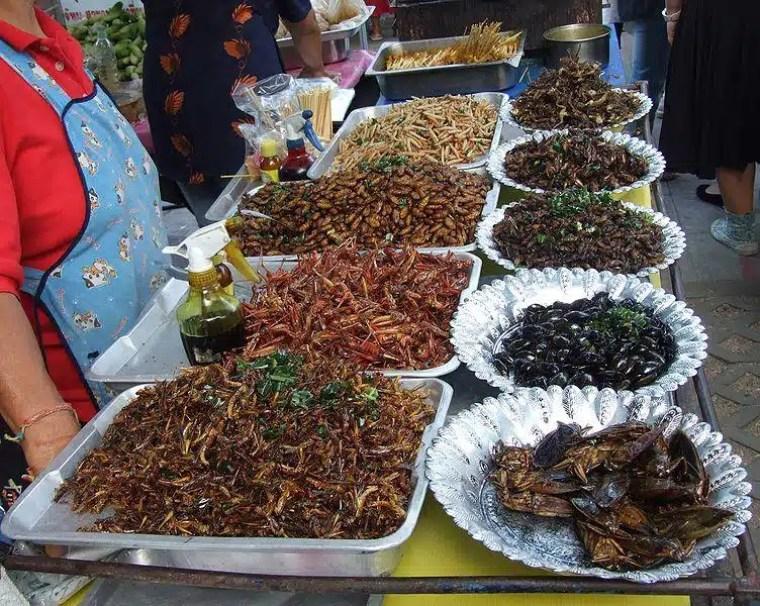 insetos na tailândia