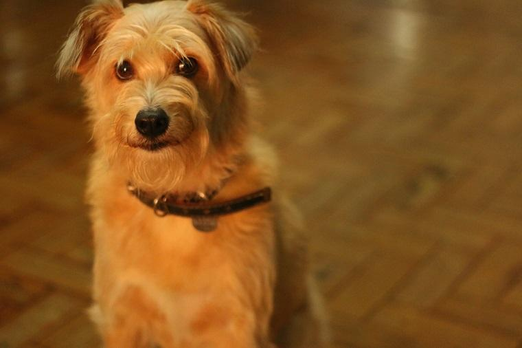 Bigode - viajar com cachorro