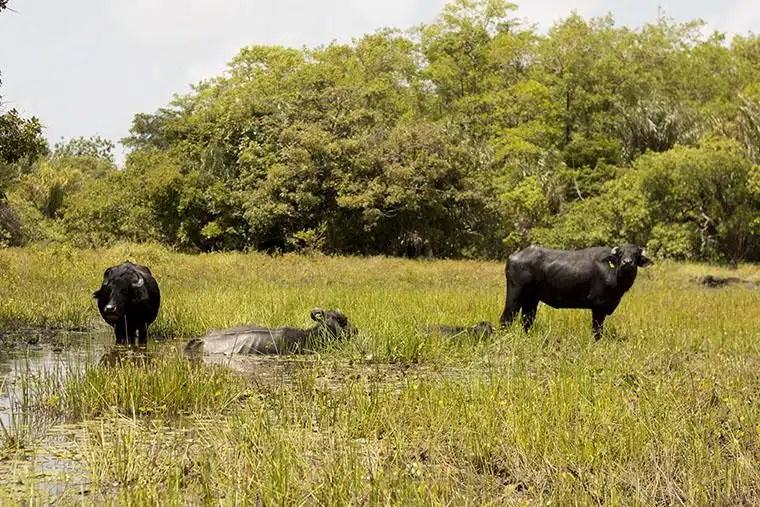 Ilha do Marajó, Pará