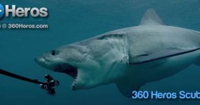360-Shark