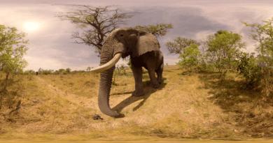 Afrika Oliphant