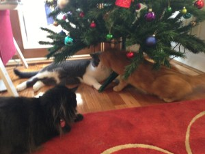 tree fight