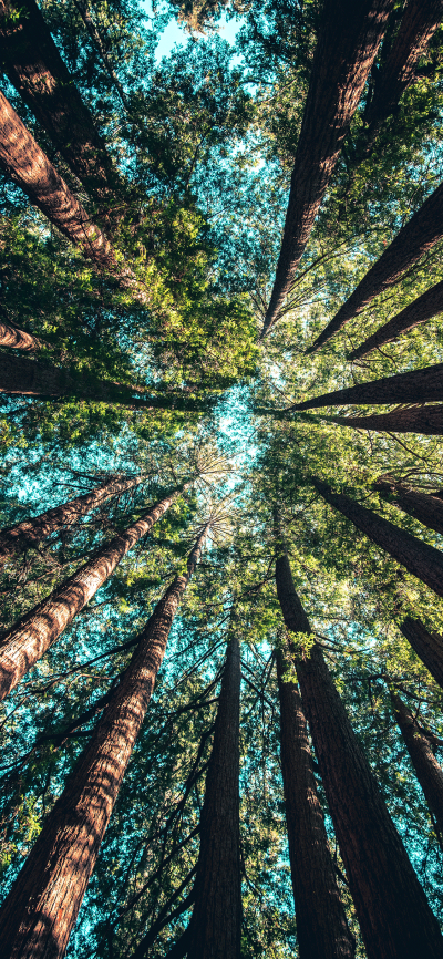 Trees Wallpaper for iPhone X, 8, 7, 6 - Free Download on 3Wallpapers