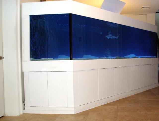 The 2,000 gallon setup was sold and maintained by Complete Aquariums