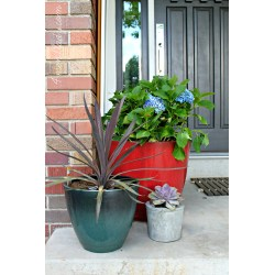 Sightly Some Plants Made My Self Afront Porch Container Container Home Depot Container Garden Ideas Home Depot Garden Hose Container I Loaded Up My Hit Up Home Depot