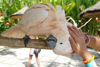 Bali-Bird-Park (51) copie