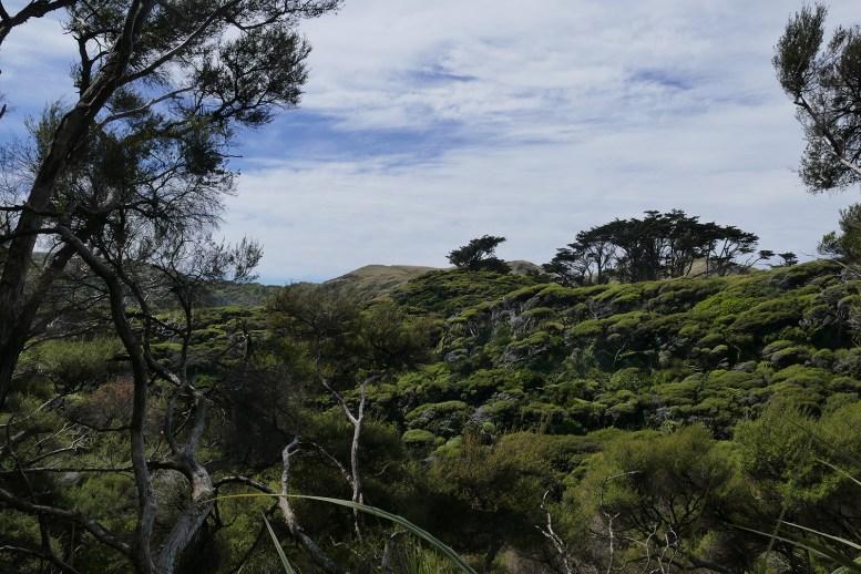 nouvelle-zelande-roadtrip-wharariki-beach (11)