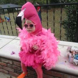 A funky flamingo