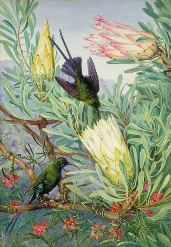 """""""Honeyflowers and Honeysuckers"""" (1882), South Africa (via WikiPaintings)"""