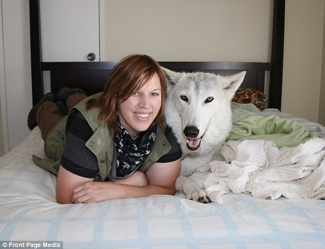 That lovin' feeling: Kimmi Kraus shares her bed with Damu, a wolf she has raised since he was only six weeks old
