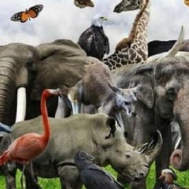 Vive el planeta su sexta gran extinción en masa; la humanidad la propicia
