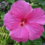 Grand-Hyatt-Kauai-flower