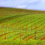 pdx-lane-county-vineyard