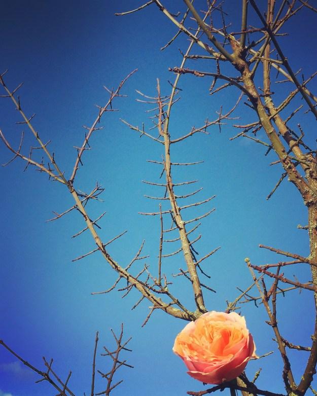 Photo 28-01-2016, 13 43 11
