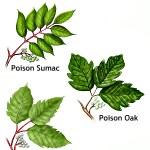 poisonoakivyandsumac