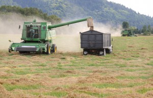 Oregon Grass Seed Harvesting