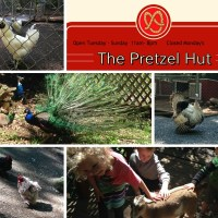 The Pretzel Hut FREE Petting Zoo in Newmanstown, PA