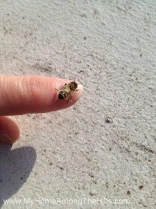 A bee on my finger!