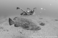 Michael Patrick O'Neill with his goliath grouper friend
