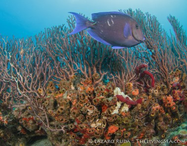 The gorgeous reef system on Flower Gardens.