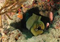 "A Green Moray Eel peeking out of his ""cave"""