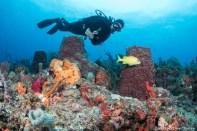 The beautiful reefs of Breaker's reef.