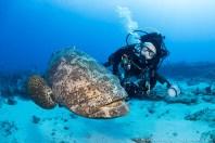 Jayne Martin and goliath grouper